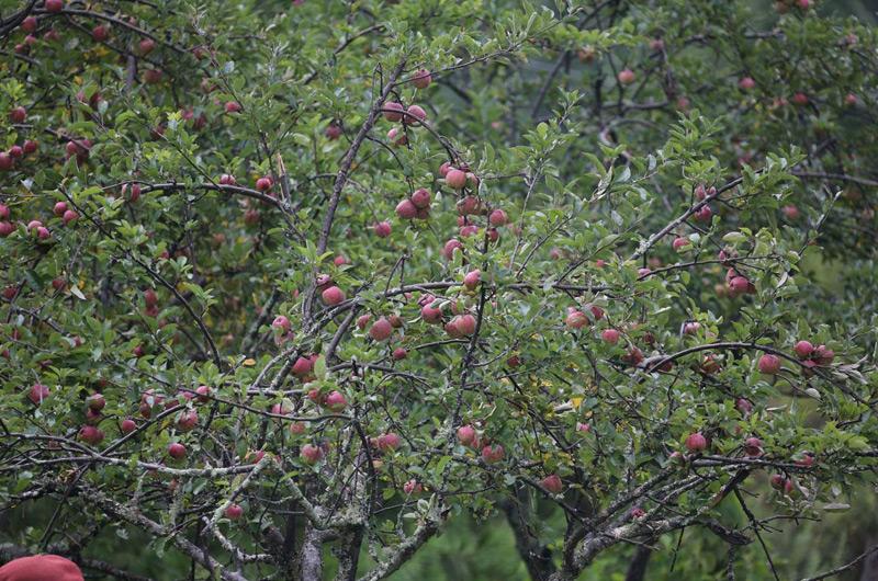nirvana-orchard-800x530